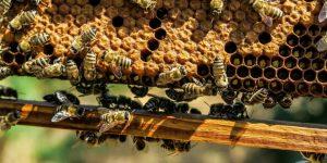ácido oxálico en la apicultura